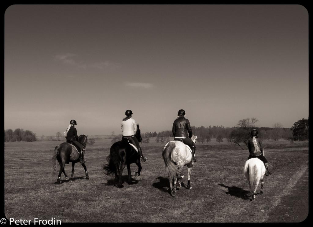Marta, Ingar, Marie och Greta rider ut på revingefältet