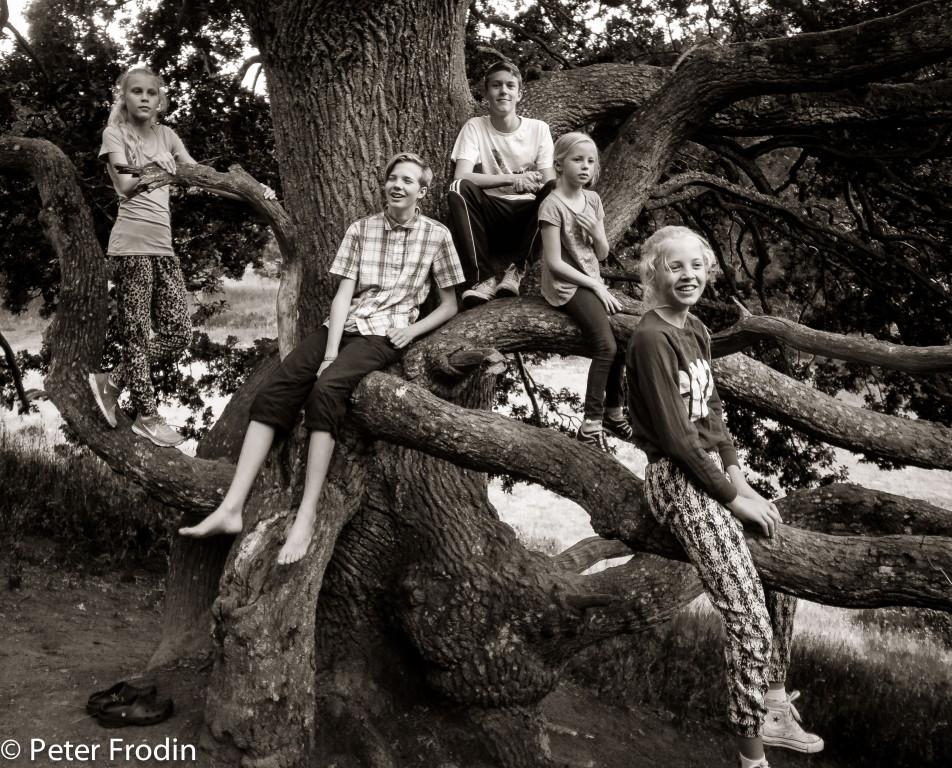 Barn och eken