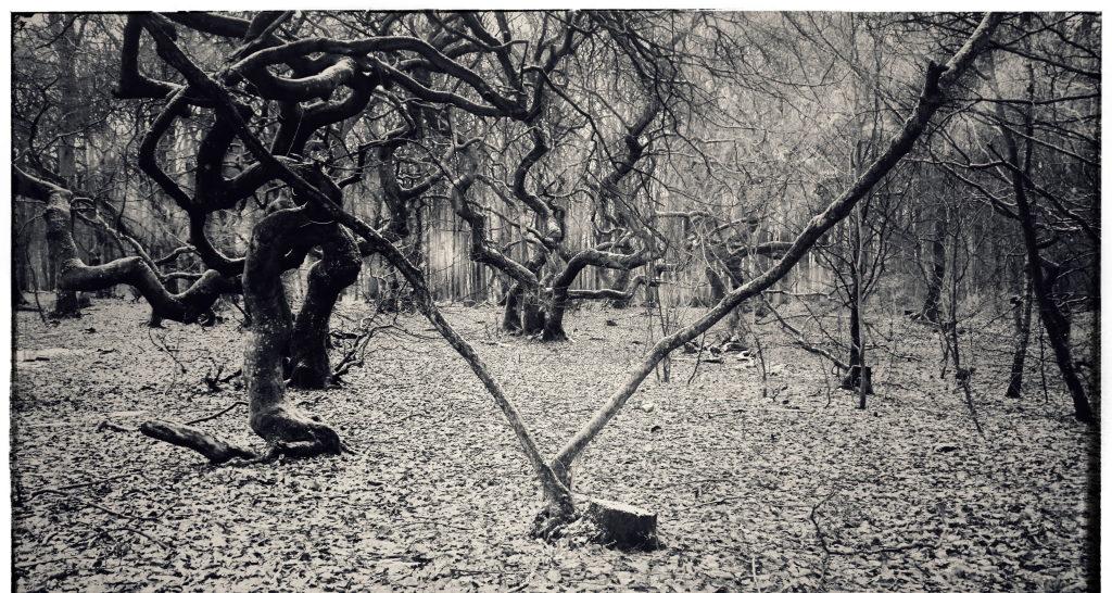Prästaskogen - Trollskogen i Torna Hällestad