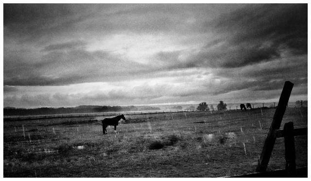 Regn över hästhagen