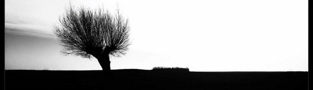 Rastlös betraktare, (1/125 – f/16)